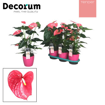 Decorum Tender