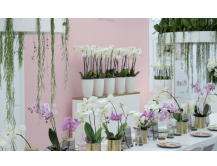 Novelties Royal FloraHolland - White World