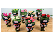Novelties Royal FloraHolland - Rosa Victory смешанная