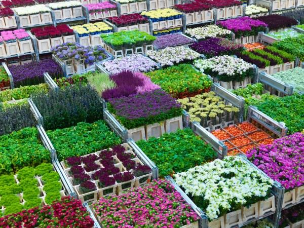 Доставка цветов и подарков в роттердаме нидерланды 35
